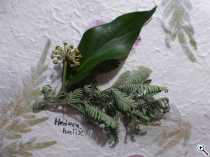 workshop herbarium 1070257 web